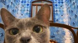 Amener son chat en voyage? MaoMay et ses maîtres sont devenus des