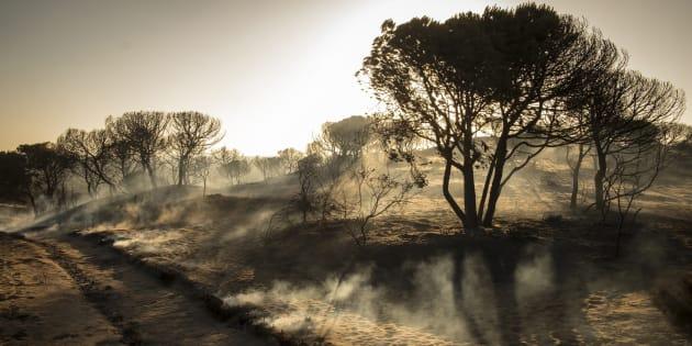 Paraje de Cuesta Maneli tras el incendio declarado el pasado sábado en la zona de Moguer (Huelva).