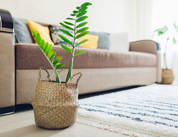 The best plant for people who always kill plants