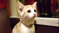 Ce chaton voyageur a retrouvé sa maîtresse grâce à la mobilisation des