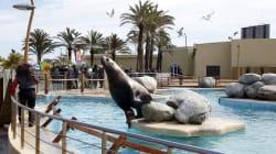 L'agence pour la protection des animaux fait valoir que Marineland est responsable de son