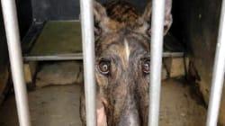 マカオのドッグレース場、530頭の犬を放置したまま閉鎖。罰金の可能性も