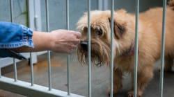 Las tiendas de mascotas de California solo venderán gatos, perros y conejos