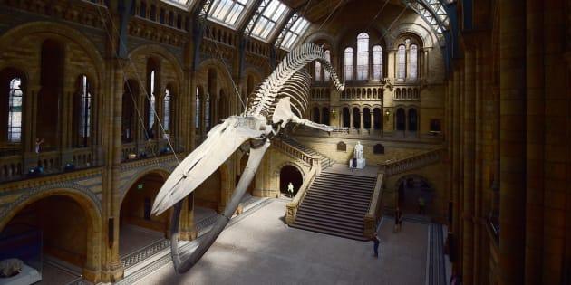 À 10 ans, il corrige une erreur du Musée d'histoire naturelle — Londres