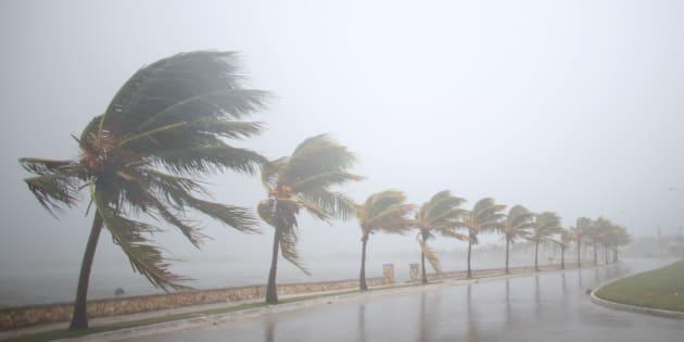Des palmiers balayés par l'ouragan Irma à Cuba le 8 septembre 2017.