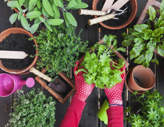Cheap hacks that will make home gardening a breeze