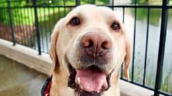 La hazaña de este perro ha conseguido más de 9 millones de