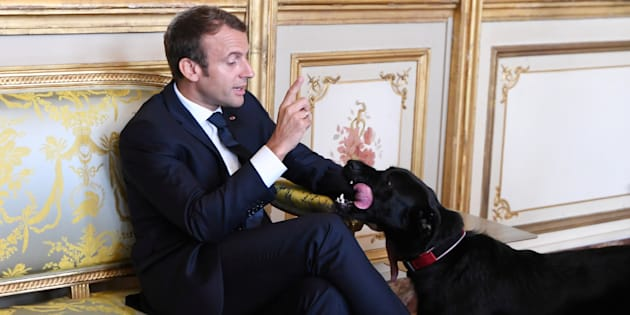 French president Emmanuel Macron gestures towards his dog Nemo during a meeting with German Vice Chancellor and German Foreign Minister at the Elysee Palace in Paris, France, Aug. 30, 2017.