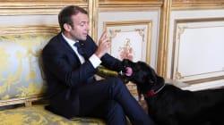 O dia em que o cachorro de Macron fez xixi tranquilão no meio de uma reunião