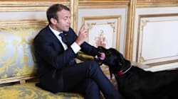 French President's Dog Makes A Pee-Line For Palace