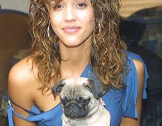Jessica Alba's dog Sid dies