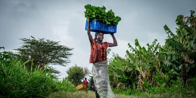 Simpliste votre solution miracle contre la faim dans le monde? La question qui fâche du HuffPost à cet économiste