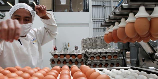 Guillermo Granja  Reuters                       Pourquoi nous ne savons toujours pas quels produits ont été contaminés au fipronil