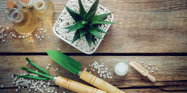 As plantas requerem série de cuidados para ficarem bem saudáveis.