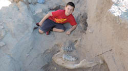 Cet enfant a découvert un fossile de stegomastodon né 1.199.991 ans avant