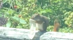 This Video Of A Squirrel Eating Out Of A Condom Sums Up