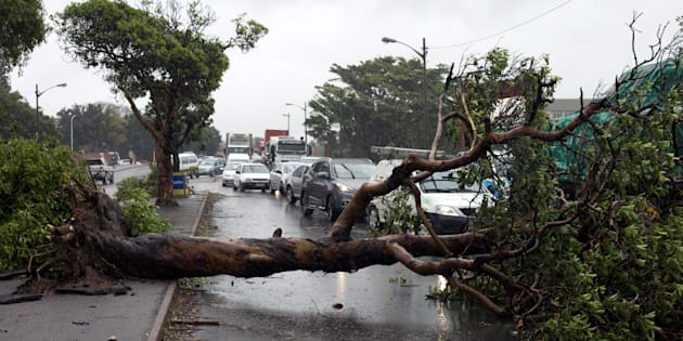 Trees fell across roads during the storms in Durban this week.