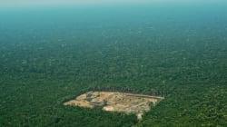 Au Brésil, l'équivalent d'un million de terrains de foot déboisés en un