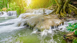 """Ecco perché hai bisogno di provare il """"Forest Bathing"""", il passatempo anti-stress dal"""