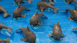 Las últimas 30 vaquitas marinas del mundo, al borde de la