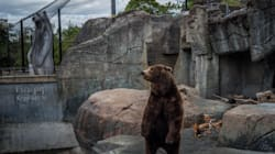 These Images Of Zoo Animals Will Make You See Captivity