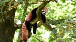 Le nombre d'animaux sauvages sur Terre a chuté de 60% en 44