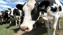 Dos grandes quesos italianos son producto del maltrato de animales, acusa