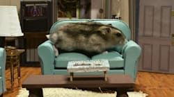 'Seinfeld' With Hamsters Is The Relief You Need From Election