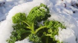 Faire pousser des légumes à -20 degrés