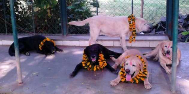 File photo of Max, Sultan, Tiger, Caesar in their farm house. They were part of the police force during 26/11 attacks.