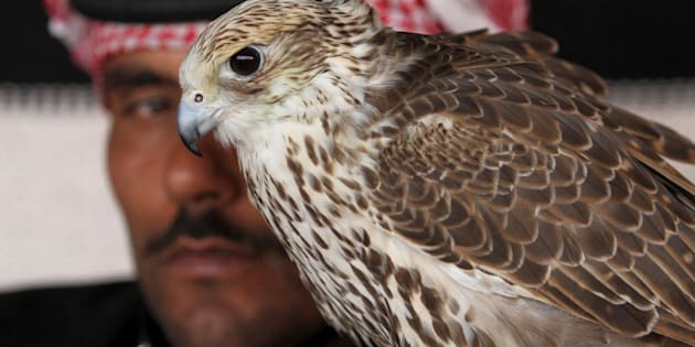"A man sits next to his falcon as he waits to participate in a falcon contest during Qatar International Falcons and Hunting Festival at Sealine desert, Qatar January 29, 2016. The participants at the contest compete for the fastest falcon at attacking its prey. Scores of wealthy Gulf Arabs descend on Iraq to hunt the houbara bustard, a rare desert bird, with trained falcons through the winter months. But the kidnapping of 26 Qataris in December 2015 in the Iraqi desert while hunting, including members of the country's royal family, has highlighted the risks of pursuing the ""sport of kings"" at a time of heightened regional turmoil.  Picture taken January 29, 2016. REUTERS/Naseem Zeitoon"