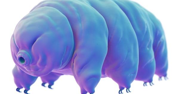 Cet animal microscopique pourrait bien être la solution pour survivre pendant dix milliards d'années.