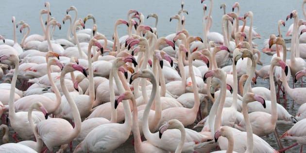 Le parc ornithologique de Pont-de-Gau abrite la seule colonie de flamants roses de France.