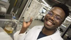 """En el futuro, la orina humana servirá para crear los """"bioladrillos"""" con los que se construirán"""