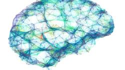 Le molteplici interazioni tra sesso e cervello negli studi di Luciano