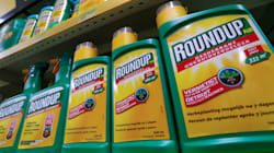 Monsanto subit un second revers en