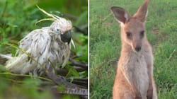 From Platypi To Kangaroos: Animals Made Homeless In The
