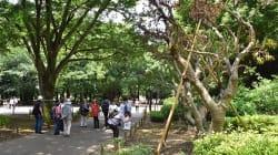 上野公園の樹木/7年で570本を伐採、「伐り過ぎ!」と批判の声