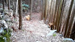 山林王・土倉庄三郎の林業哲学/搬出は安定供給の要、防災と景観につながる施業…