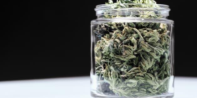 Cannabis libera, il disegno di legge M5s: