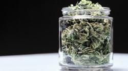 BLOGUE Sept mythes sur le cannabis et sa