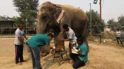 Abre sus puertas primer hospital para elefantes en la