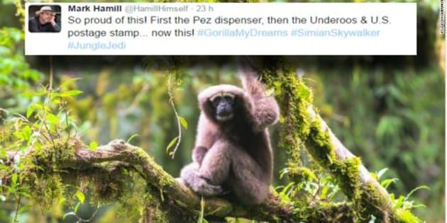 """Mark Hamill est le premier fan de cette nouvelle espèce de singe """"Skywalker"""""""