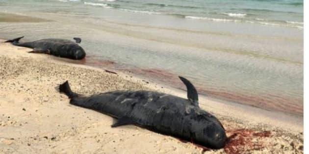 Denis Brogniart a fait une triste découverte sur cette plage des Fidji