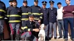 La storia di Pina, cagnolina abbandonata in strada, salvata dalla polizia stradale e