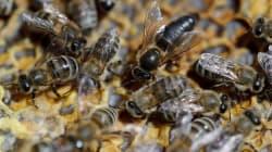 Ottawa veut interdire des pesticides nocifs pour les