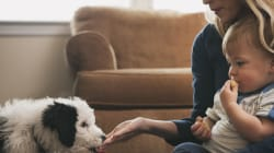 I Tried My Parenting Skills On My Puppies And It Gave Me Paws For