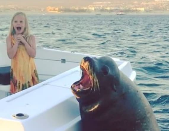 Gigantic seal hitches ride on family's fishing boat