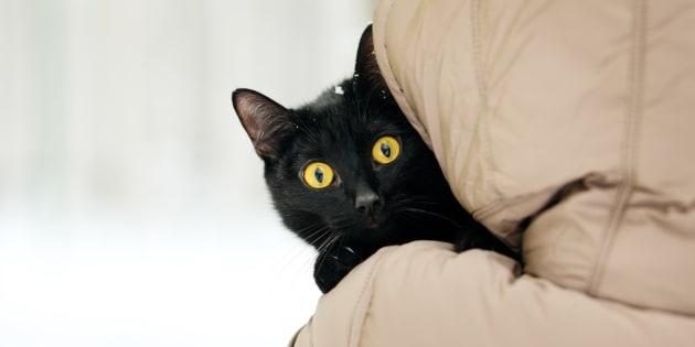 Avoir un chat était pourtant le dernier de ses souhaits.