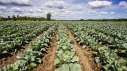 BLOGUE L'agriculture, la grande oubliée du gouvernement